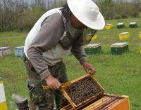 Ενίσχυση αντικατάστασης κυψελών και μετακινήσεις μελισσοσμηνών για τους μελισσοκόμους